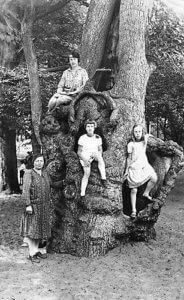 oude-holle-boom-kr-lek