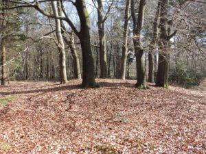 [B1B] De Hoogstraat grafheuvel met een kring van acht beukenbomen. Foto Museum Oer A