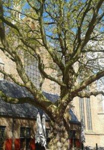 Grote of St. Jacobskerk Den Haag